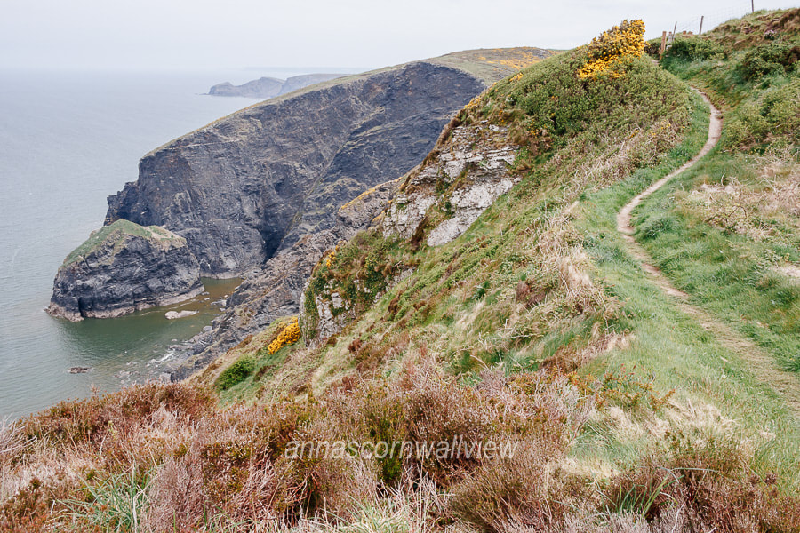 Picture of the coast path by Buckator Cliff